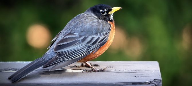 The Story Of An Unusual Bird